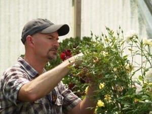 Brad Jalbert in his hybridizing greenhouse on his rose nursery.